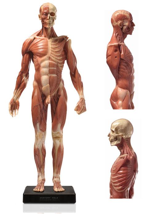 20141214_anatomy_00