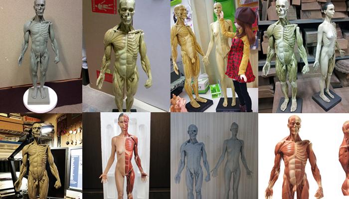 人体構造を理解する為に、アナトミーフィギュアが欲しい!