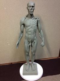 20141214_anatomy_01