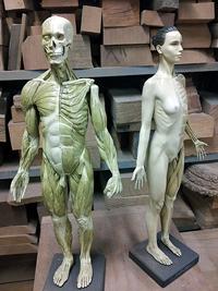 20141214_anatomy_05