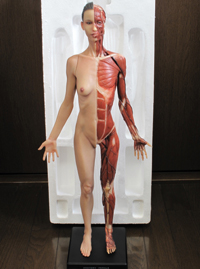20141214_anatomy_07