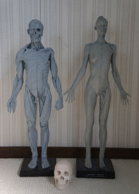 20141214_anatomy_08