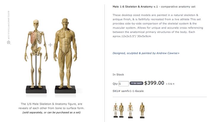 anatomytools.comで人体模型オーダーしました!手順を書いてみましたよ。