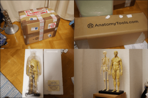 20150131_anatomytools.com_00
