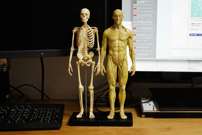 anatomytools.comで注文した人体模型がちゃんと届きました!レビュー
