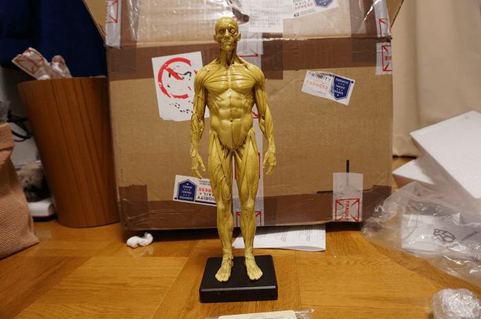 20150131_anatomytools.com_15