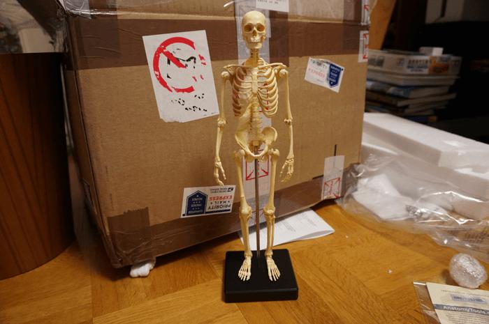 20150131_anatomytools.com_18
