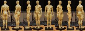 20150131_anatomytools.com_color