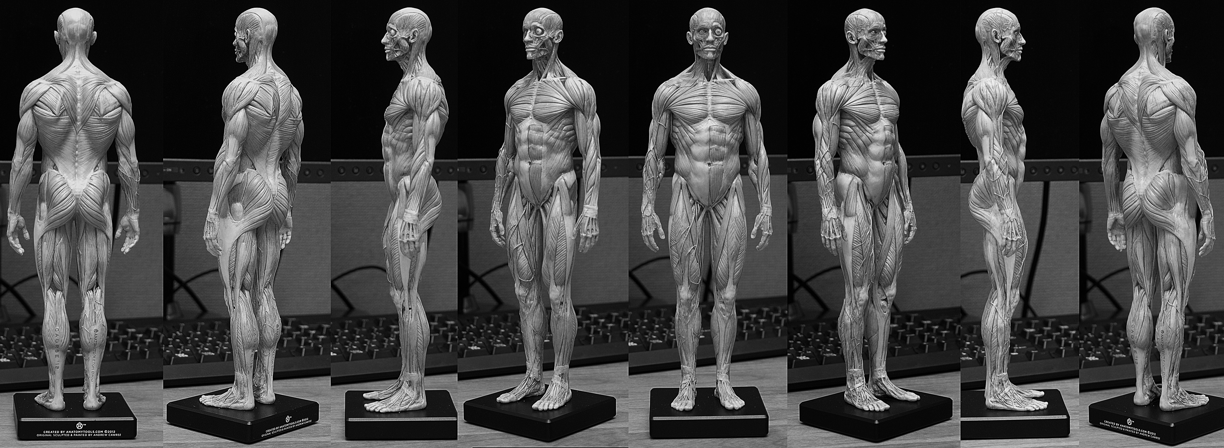 20150131_anatomytools.com_gray