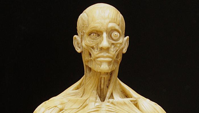 リファレンスに是非!anatomytoolsの男性フィギュア高画質写真を撮影しました!