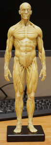 20150131_anatomytools.reference01