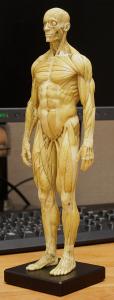20150131_anatomytools.reference02
