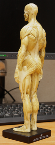 20150131_anatomytools.reference04
