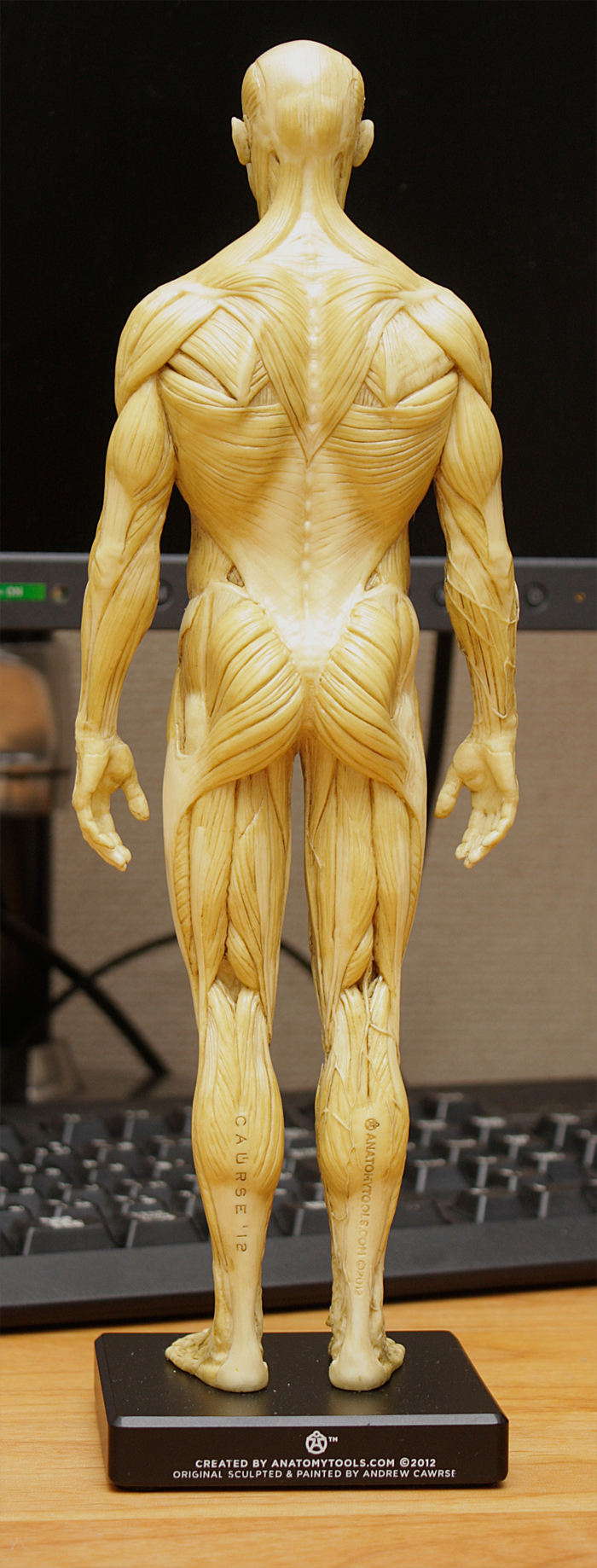 20150131_anatomytools.reference05