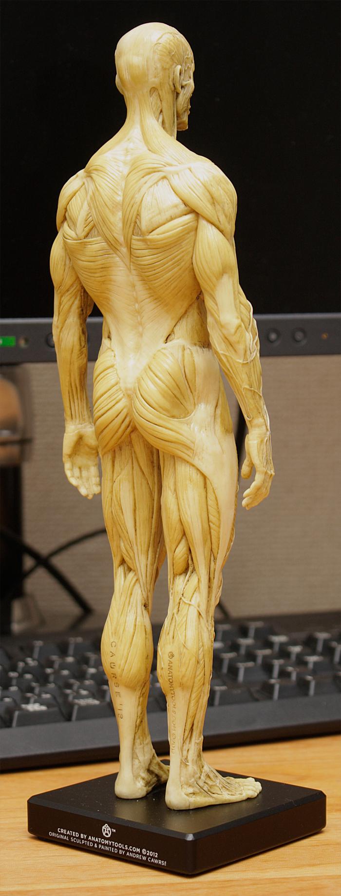 20150131_anatomytools.reference06