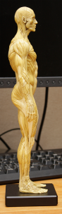 20150131_anatomytools.reference07