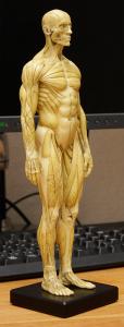 20150131_anatomytools.reference08