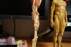 150301_anatomytools_01