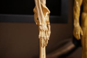 150301_anatomytools_02