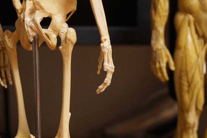 150301_anatomytools_03