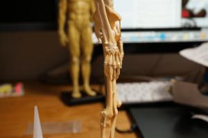 150301_anatomytools_08