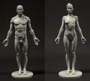 160510_anatomy