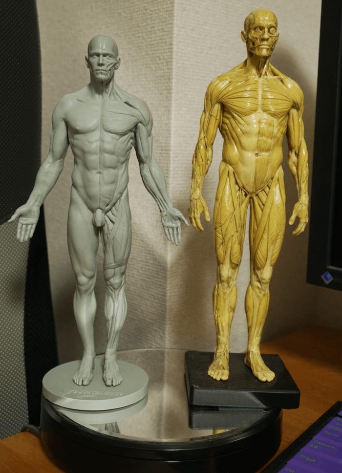 160719_anatomy_3dtotal_10