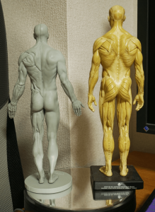 160719_anatomy_3dtotal_11